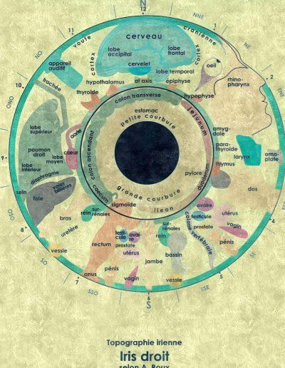 iridologie iris droit